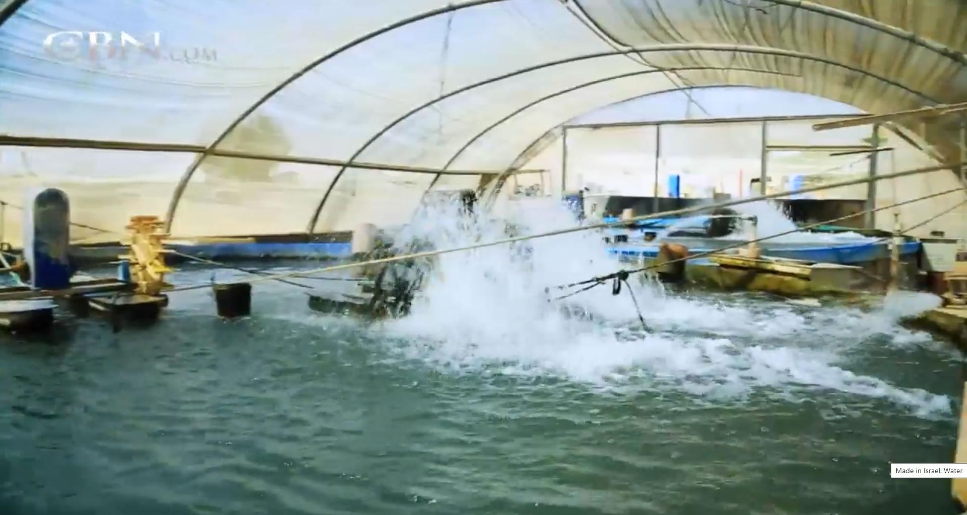 Fish Pools in The Desert